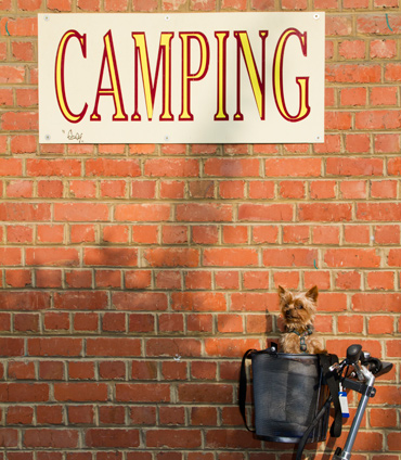 Teddie-camping